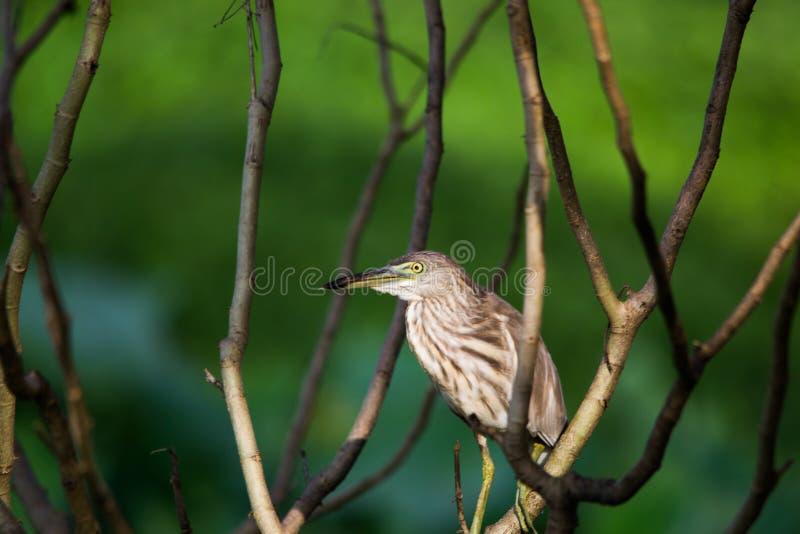 Un beau héron se reposant sur une branche d'arbre photographie stock