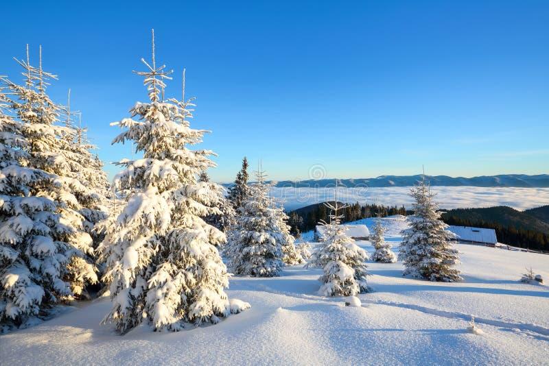 Un beau jour givré parmi de hautes montagnes et crêtes sont les arbres magiques couverts de neige pelucheuse blanche image libre de droits