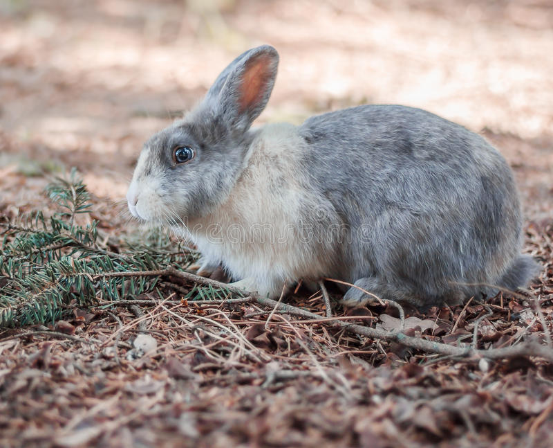 Un beau lapin photos stock
