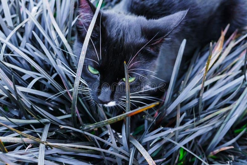 Un beau minou noir se cachant dans un parterre décoratif dans le jardin photos libres de droits