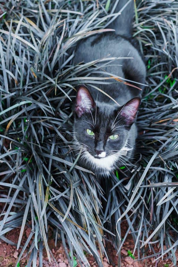 Un beau minou noir se cachant dans un parterre décoratif dans le jardin images stock