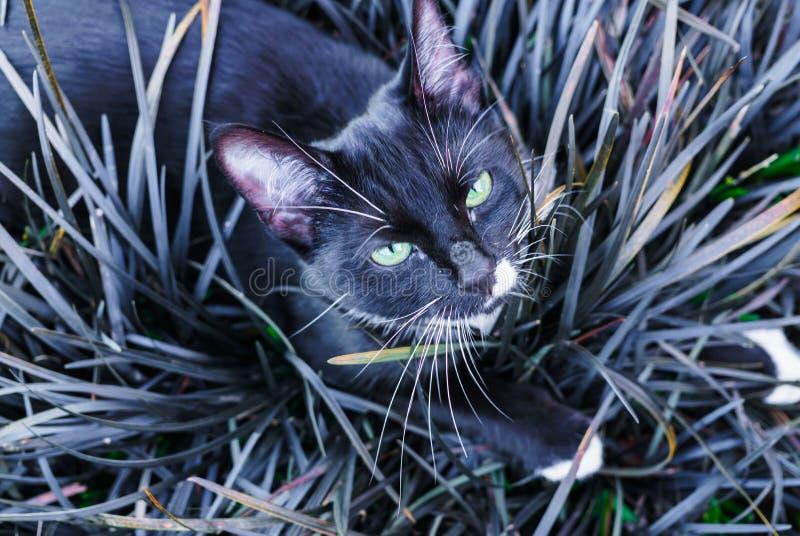 Un beau minou noir se cachant dans un parterre décoratif dans le jardin photo stock