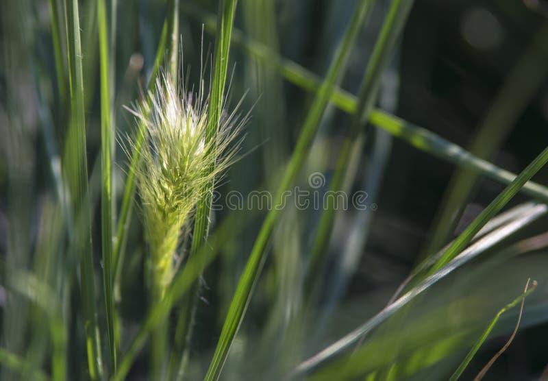 Un beau morceau d'herbe images stock