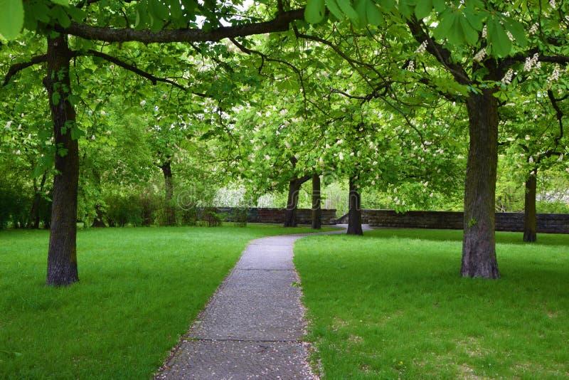 Un beau parc avec des arbres Une ruelle en pierre au milieu photos stock