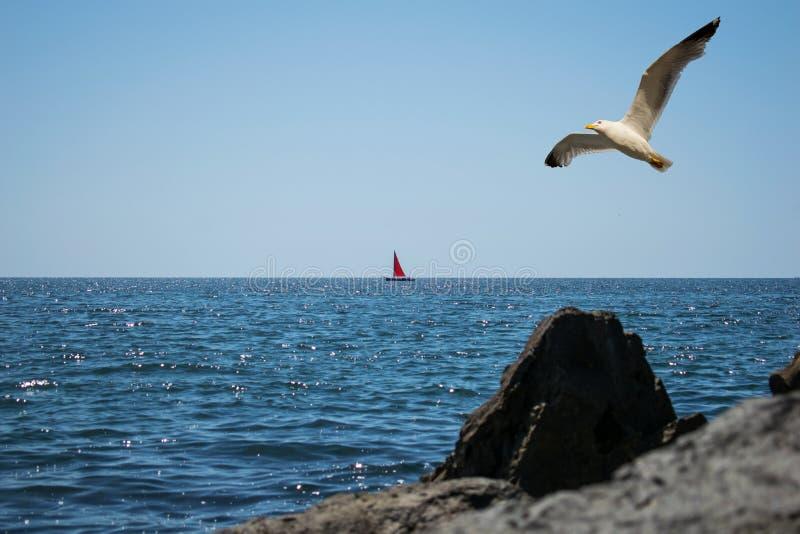 Un beau paysage à la mer Un bateau à voile rouge est vu sur l'horizon Une grande mouette croise le ciel bleu dans un jour d'été photographie stock libre de droits