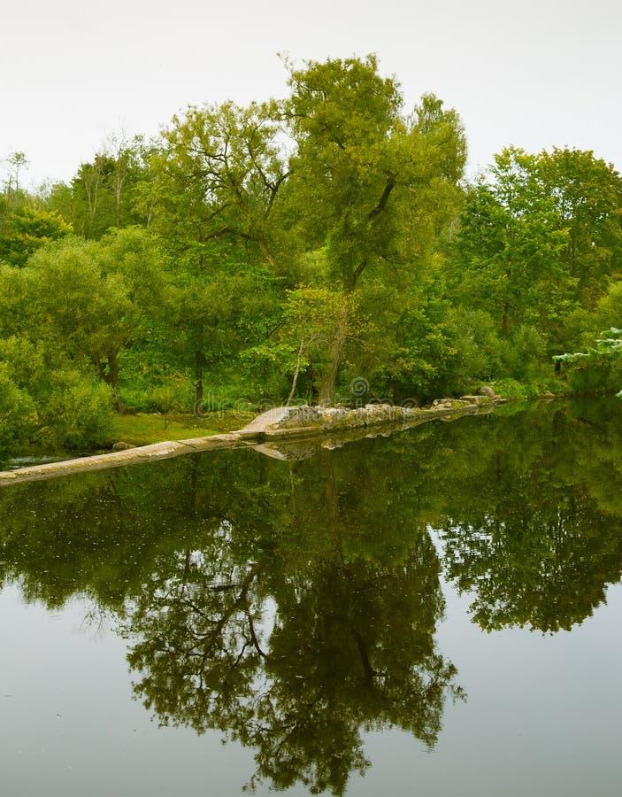 Un beau paysage reflété d'une forêt près de la rivière photographie stock libre de droits