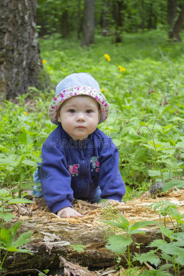 Un bebé lindo 9 meses, paseos a través del bosque y árbol caido estudios Muchacha del niño en un suéter y una Panamá azules que r fotos de archivo libres de regalías