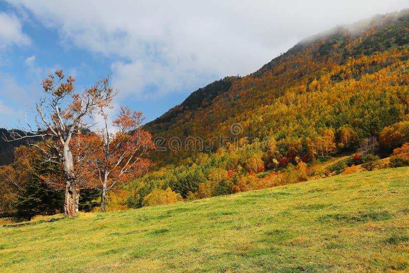 Un bel arbre d'érable sur le flanc de coteau d'automne sous le ciel ensoleillé | images libres de droits