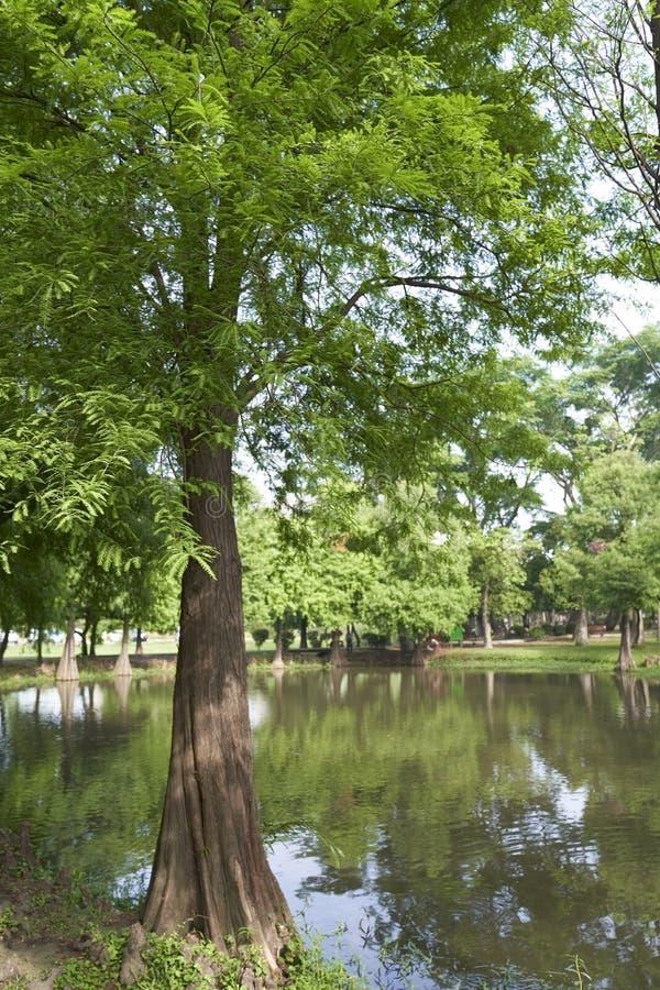 Un bel arbre dans Barclay Memorial Park photographie stock libre de droits