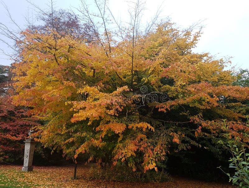 Un bel arbre dans des couleurs automnales photo libre de droits