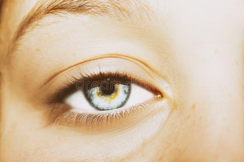 Un bel oeil perspicace de regard Fermez-vous vers le haut du tir photographie stock libre de droits