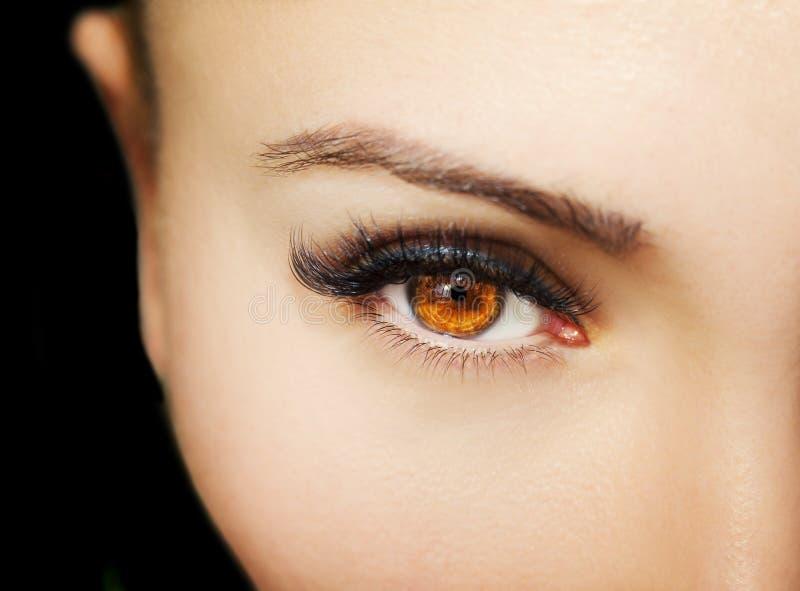 Un bel oeil perspicace du ` s de femme de regard Fermez-vous vers le haut du tir photos libres de droits