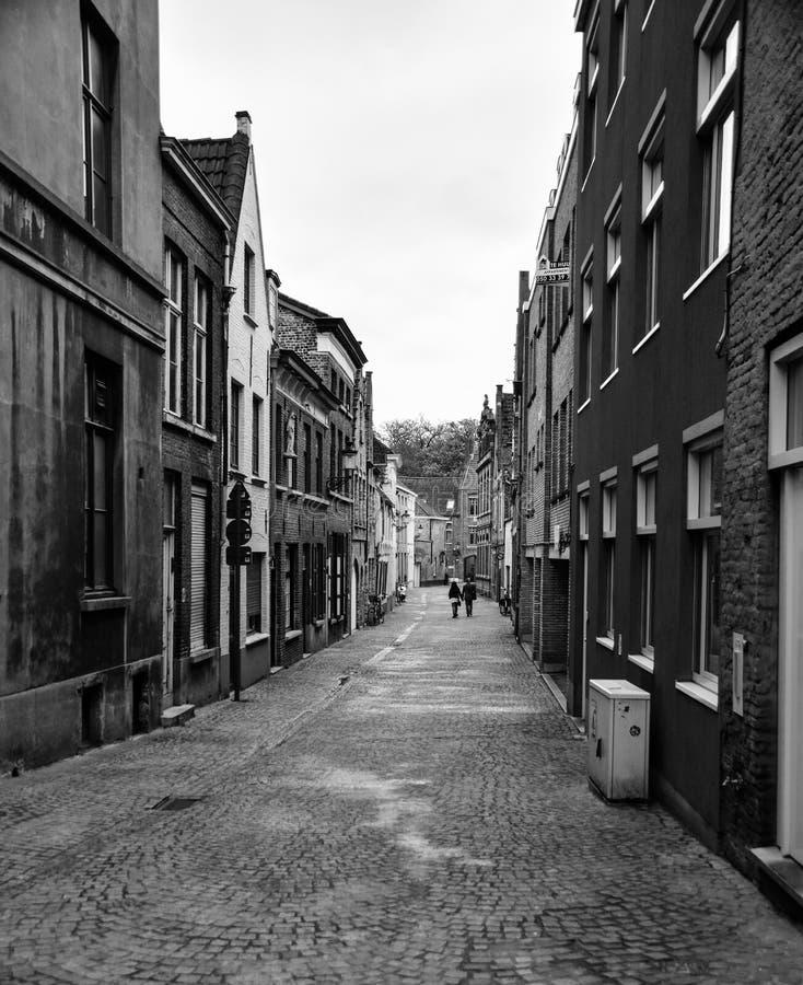 Un belga maúlla fotos de archivo