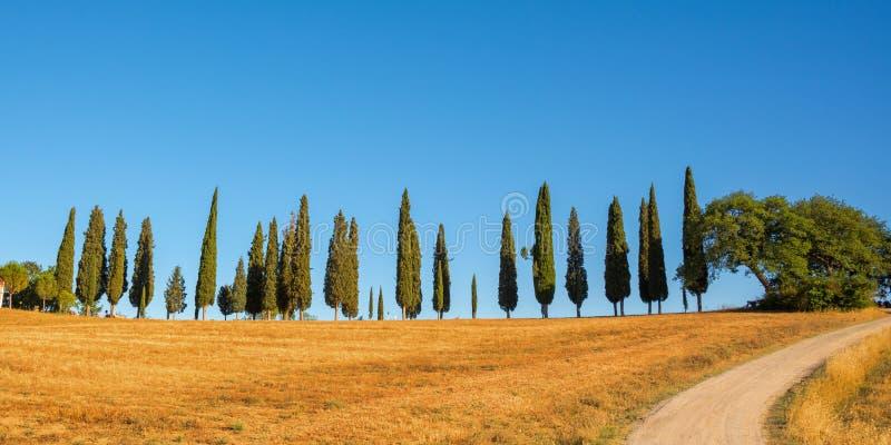 Un bellissimo panorama tipico con gli alberi di cipressa in Toscana Italia immagini stock