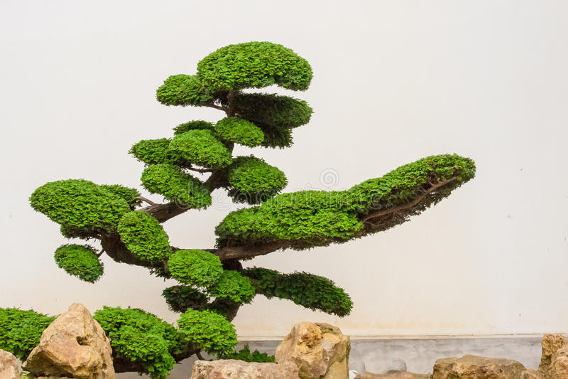 Un Bello Albero Dei Bonsai Con Le Rocce Fotografia Stock Libera da Diritti