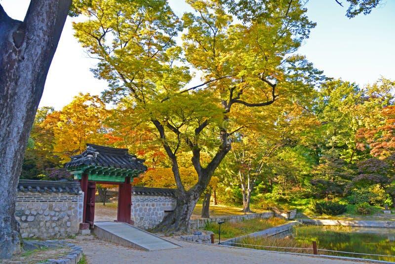 Un bello albero di autunno nel giardino segreto di Changdeokgung fotografia stock libera da diritti