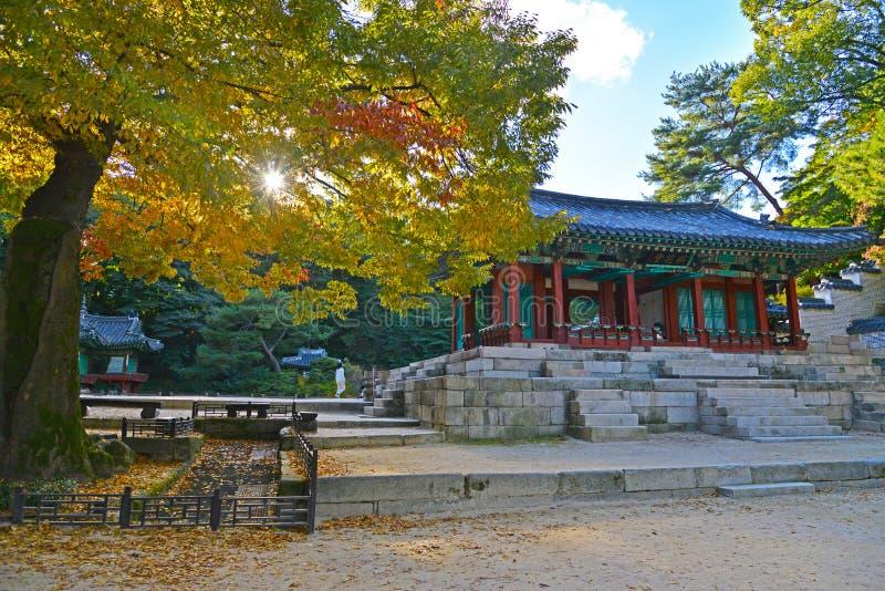 Un bello albero di autunno nel giardino segreto di Changdeokgung fotografie stock