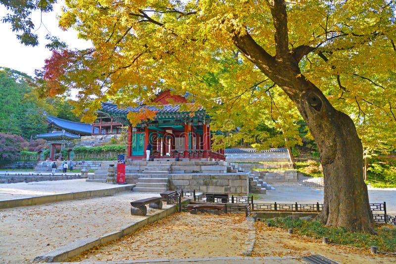 Un bello albero di autunno nel giardino segreto di Changdeokgung fotografie stock libere da diritti