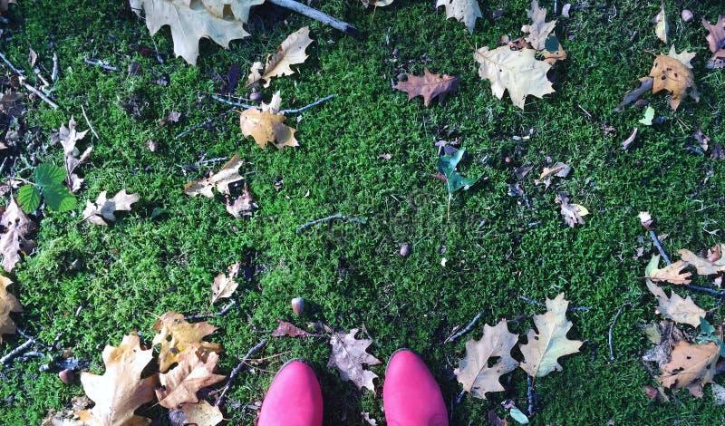 Un bello autunno fotografia stock