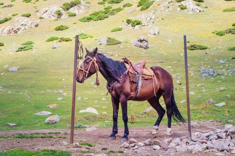 Un bello caballo con una montura fotos de archivo libres de regalías