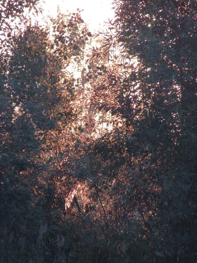 Un bello contorno favoloso di fogliame dorato soleggiato openwork dei cespugli e degli alberi alla luce del sole giallo in aument immagini stock