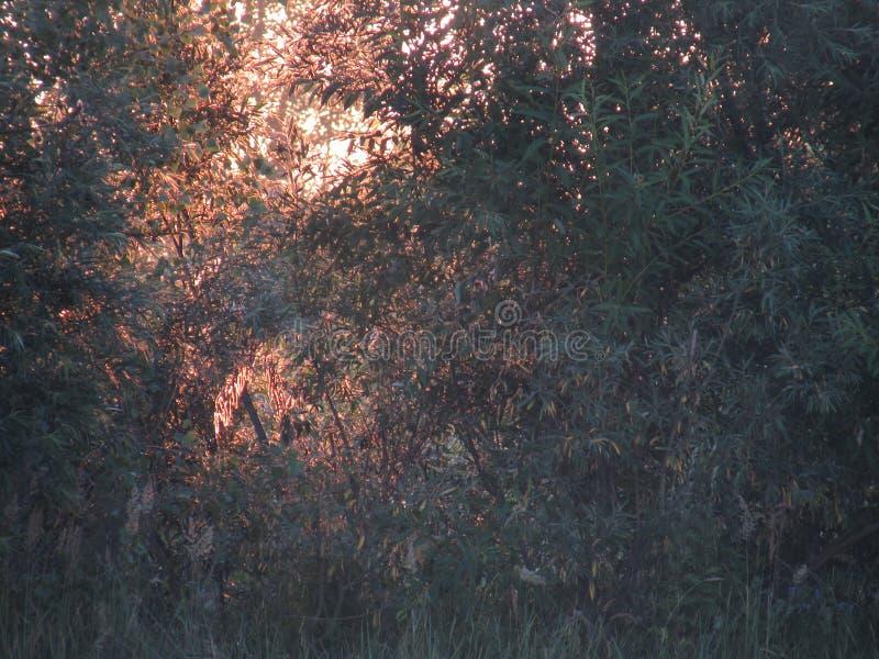 Un bello contorno favoloso di fogliame dorato soleggiato openwork dei cespugli e degli alberi alla luce del sole giallo in aument fotografia stock libera da diritti