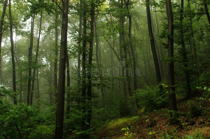 Un bello e paesaggio mistico della foresta in pieno di silenzio fotografie stock libere da diritti