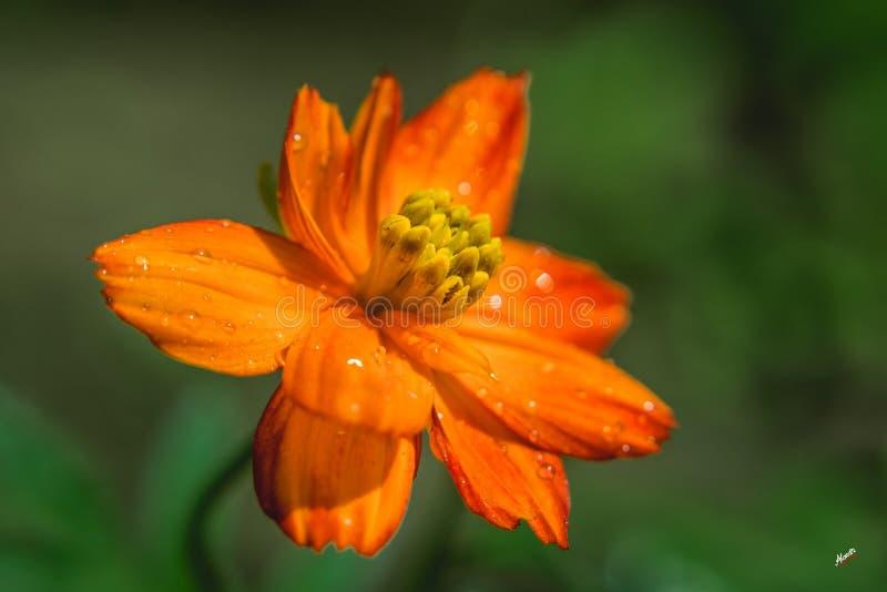 Un bello fiore fotografia stock