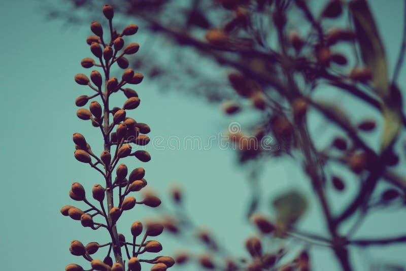 Un bello fiore in pieno delle bacche e dei coni fotografia stock libera da diritti