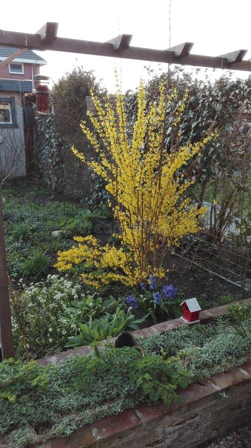 Un bello giorno in primavera fotografie stock libere da diritti