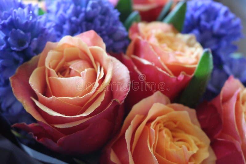 Un bello mazzo delle rose e dei giacinti far? appello a ad ogni donna La sua fragranza reale conquister? l'ogni fotografia stock