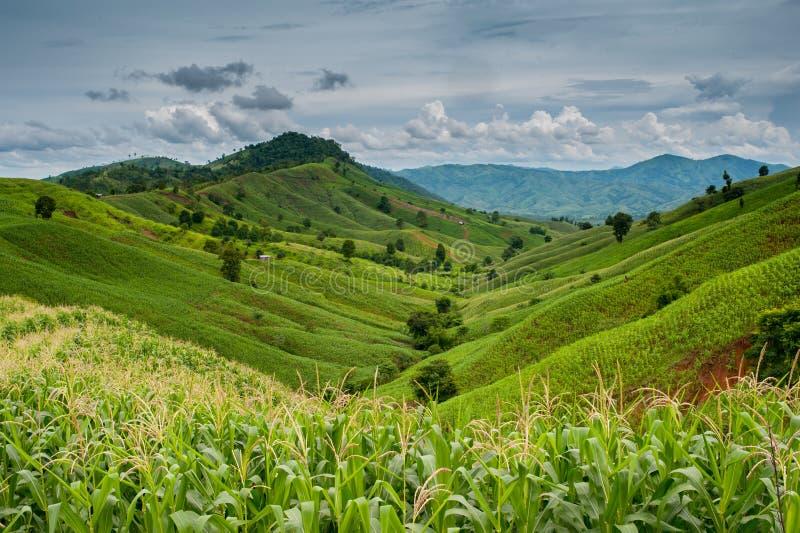 Un bello paesaggio con la natura delle montagne fotografia stock libera da diritti