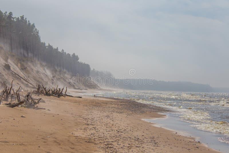 Un bello paesaggio in un giorno ventoso, sabbia di salto della spiaggia del vento fino alle alte scogliere sabbiose Paesaggio del fotografie stock libere da diritti