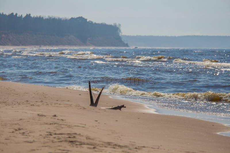 Un bello paesaggio in un giorno ventoso, sabbia di salto della spiaggia del vento fino alle alte scogliere sabbiose Paesaggio del immagini stock