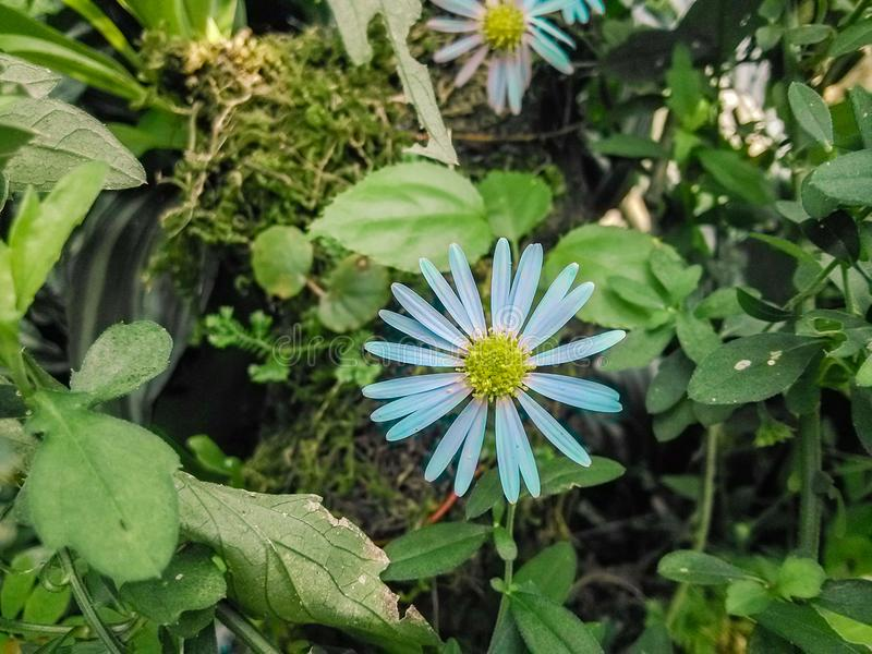 Un bello piccolo fiore selvaggio fotografia stock libera da diritti