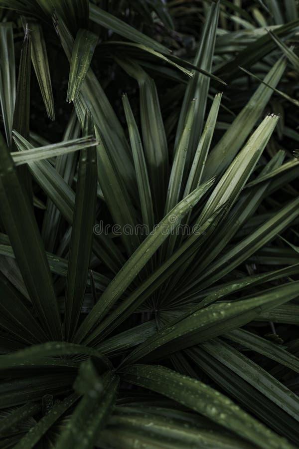 Un bello primo piano della pianta immagine stock