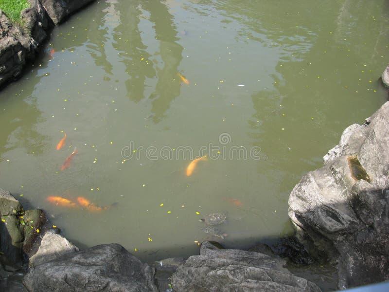 Un bello stagno di pesce al parco della zona verde di Makati, citt? di Makati fotografia stock