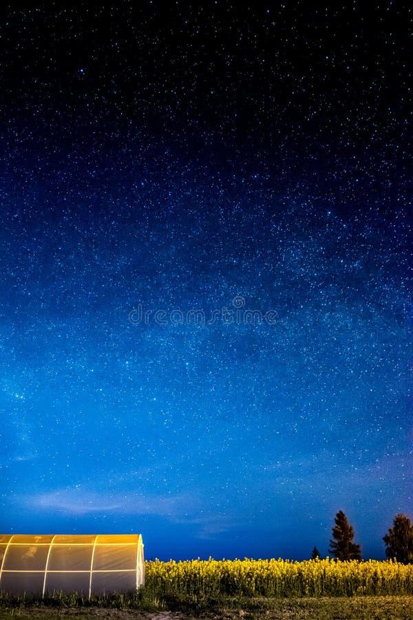 Un bello tramonto, alberi e stelle fotografie stock libere da diritti