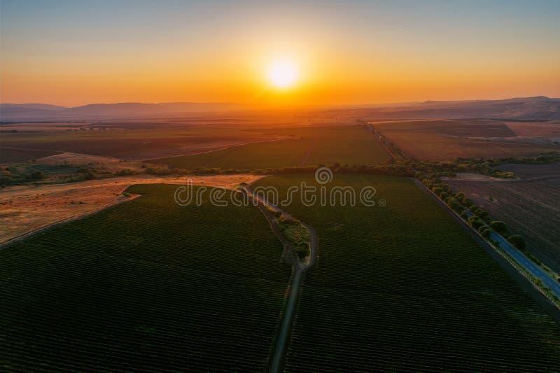Un bello tramonto sopra il campo della vigna in Europa immagine stock libera da diritti