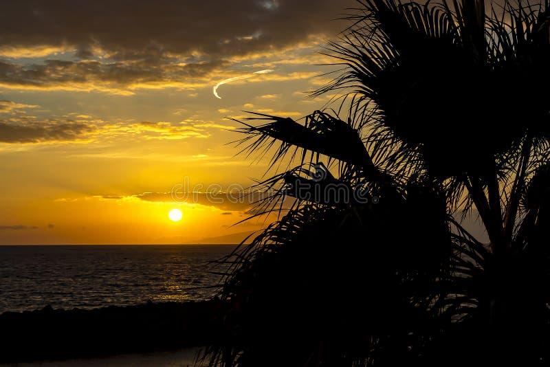 Un bello tramonto sulla costa o su Costa Adeje con una palma nella priorità alta e nella distanza il profilo dell'isola di fotografia stock