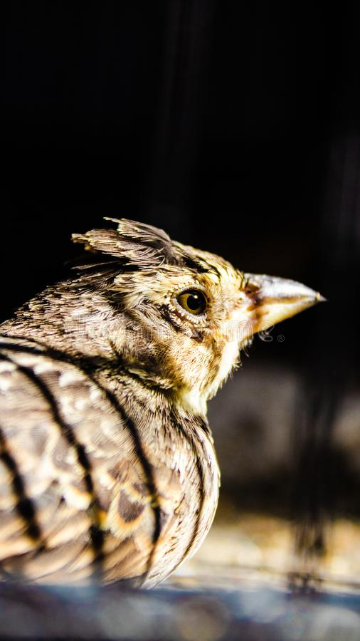 Un bello uccello che sta pensando a qualcosa immagine stock