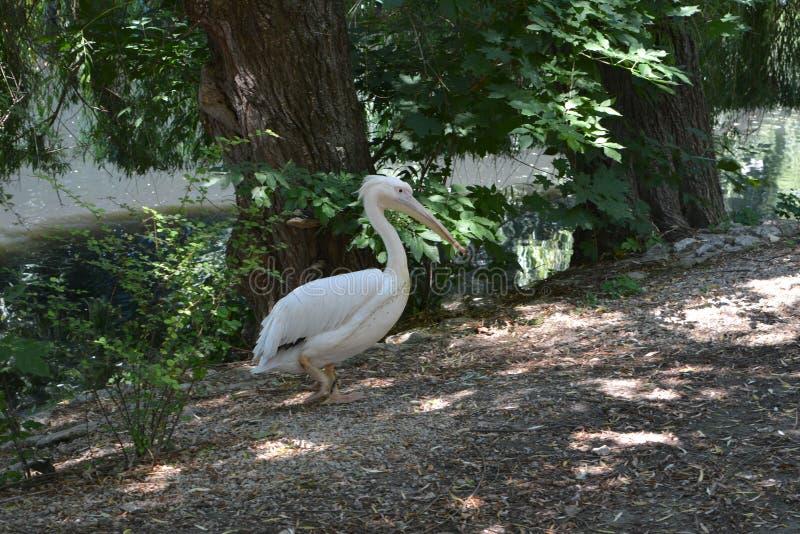 Un bello uccello nello zoo fotografia stock