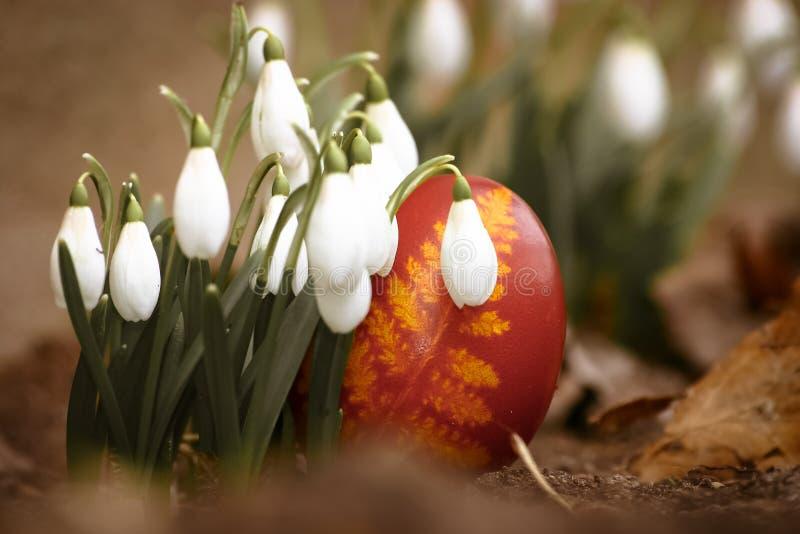 Un bello, uovo di Pasqua rosso colorato nel cortile Alimento tradizionale e festival della molla immagine stock