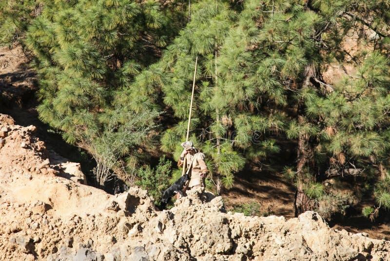 Un berger frôle des chèvres dans une forêt de pin images libres de droits