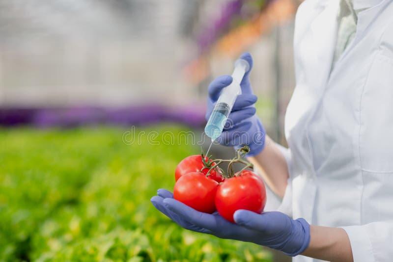 Un biólogo del científico en una capa y guantes protectores del laboratorio introduce un líquido azul en las verduras, tomates imagenes de archivo