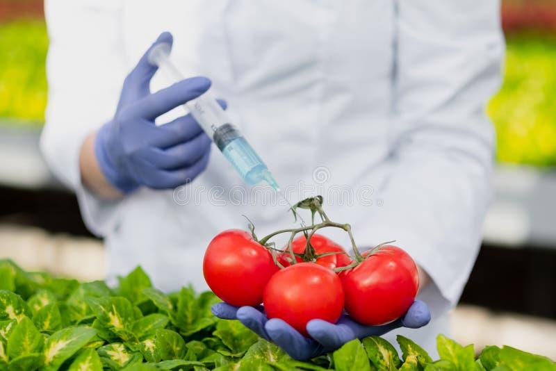 Un biólogo del científico en una capa y guantes protectores del laboratorio introduce un líquido azul en las verduras, tomates foto de archivo