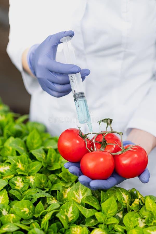 Un biólogo del científico en una capa y guantes protectores del laboratorio introduce un líquido azul en las verduras, tomates fotografía de archivo libre de regalías