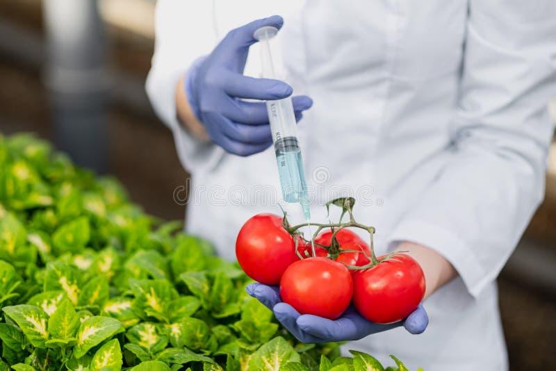 Un biólogo del científico en una capa y guantes protectores del laboratorio introduce un líquido azul en las verduras, tomates fotos de archivo libres de regalías