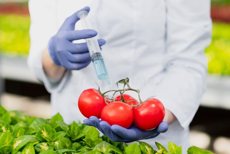 Un biólogo del científico en una capa y guantes protectores del laboratorio introduce un líquido azul en las verduras, tomates imagen de archivo libre de regalías