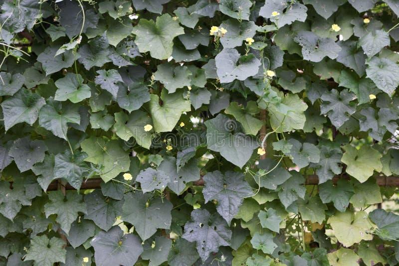 Un blackgroud des feuilles photos stock